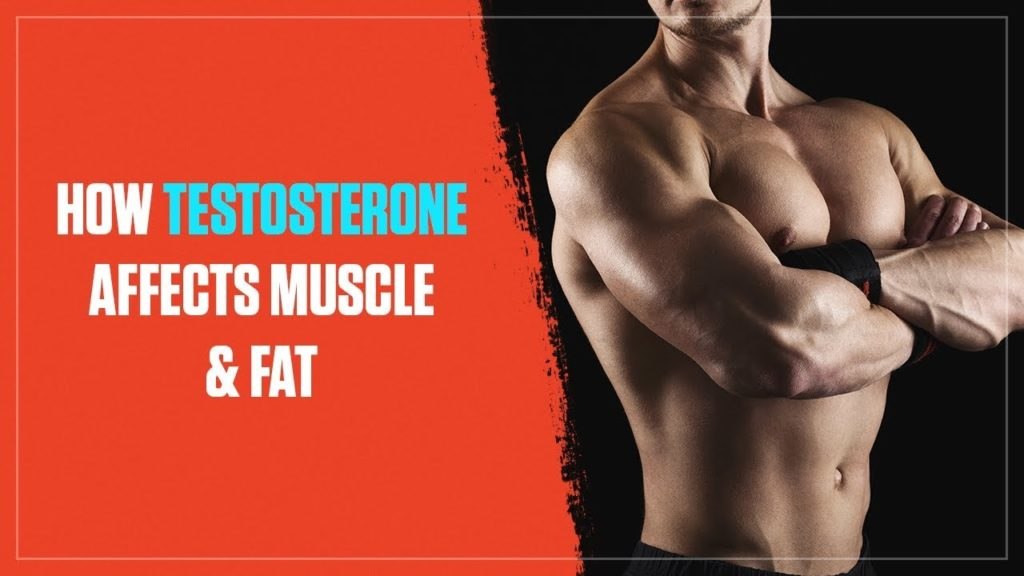 testosterone booster for muscle growth