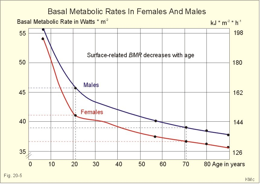 Basal metabolic rate vs Age