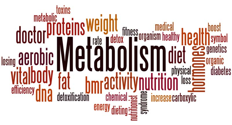 metabolism-affecting-factors